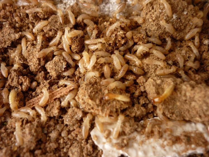 نتيجة بحث الصور عن شركة مكافحة النمل بجدة