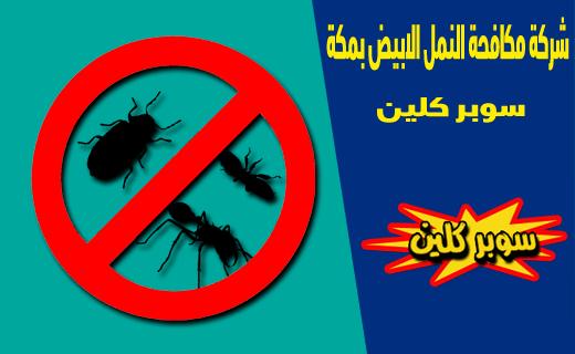 شركة مكافحة النمل الابيض بمكة المكرمة