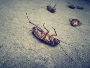 شركات مكافحة حشرات بالطائف
