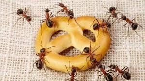 كيفية ابعاد الحشرات عن المنزل