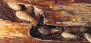 اسعار شركة مكافحة النمل الابيض بحائل